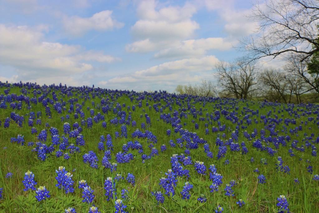 wildflowers-1187878_1920